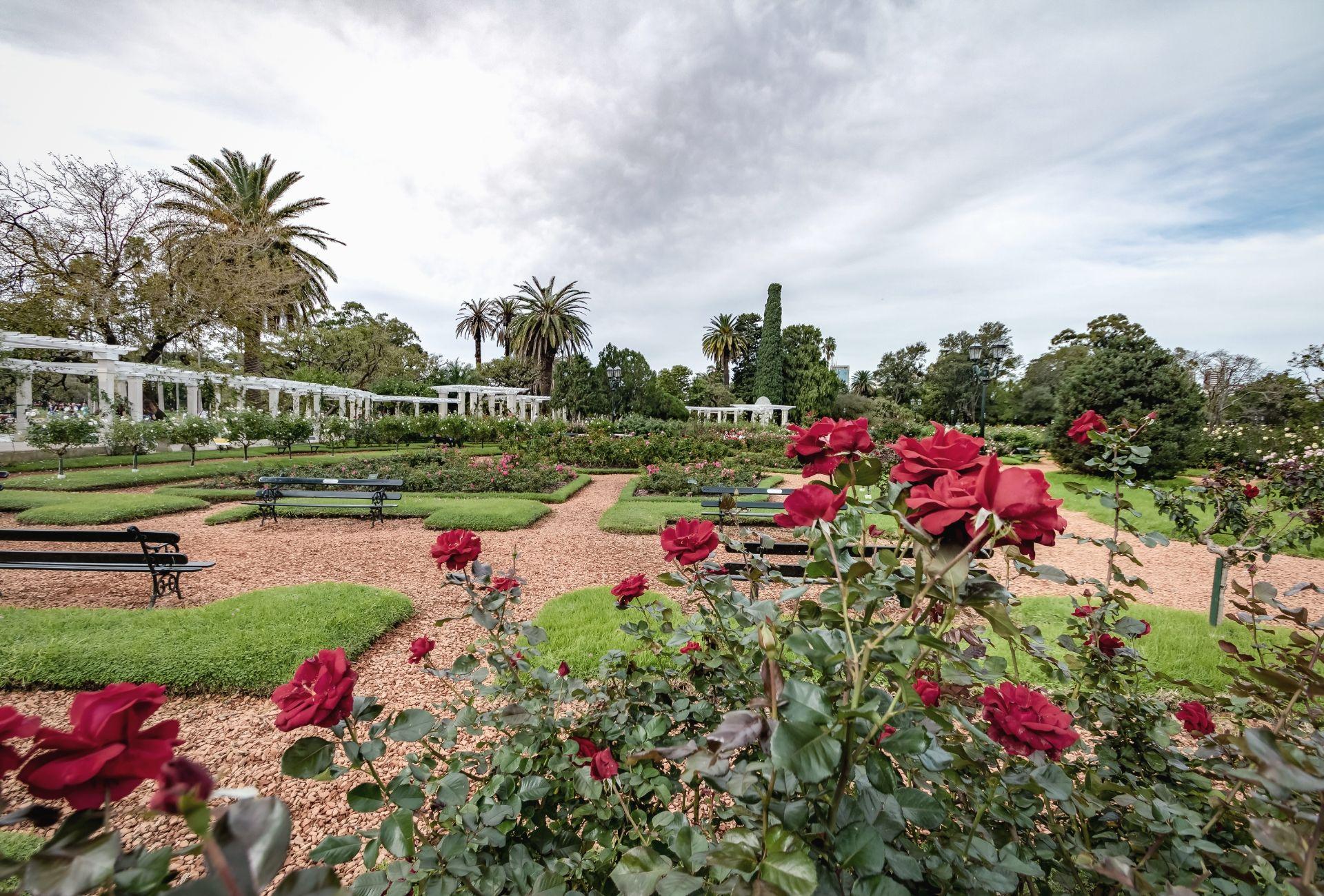 Parque El Rosedao com rosas vermelhas
